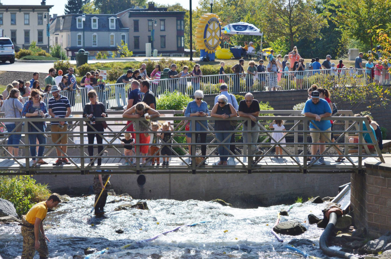 HUNDREDS of people watching the ducks race down the stream at 2017's Duck Derby.